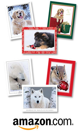 Team Husar Christmas Cards on Amazon.com